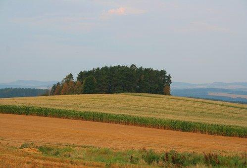 Corn, Field, Czechia, Nature, Plant, Forest, Landscape