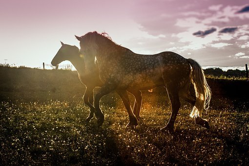 Sunset, Horses, Agility, Shadow, Sunlight, Evening Sun