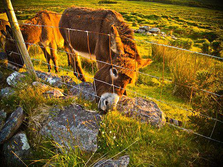 Donkey, Farm, Grass, Animal, Agriculture, Funny, Nature