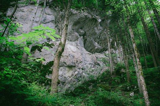 Rock, Jungle, Forest, Natural, Rainforest, Outdoors