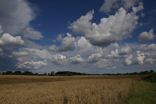 Grau, Lan, Grain, Sky, Cloud, Harvest, Agriculture