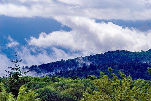 Mist, Fog, Clouds, Forest, Trees, Fir, Landscape