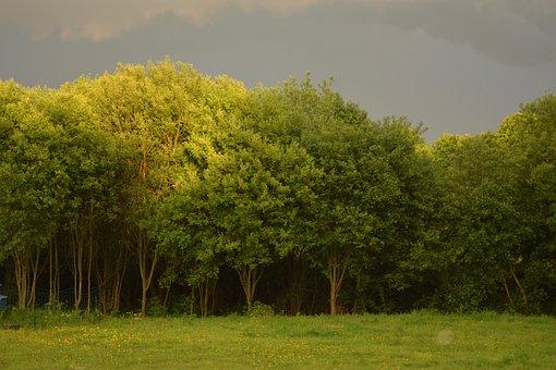 Tree, Tree Storm, Landscape Stormy, Light Up, Storm