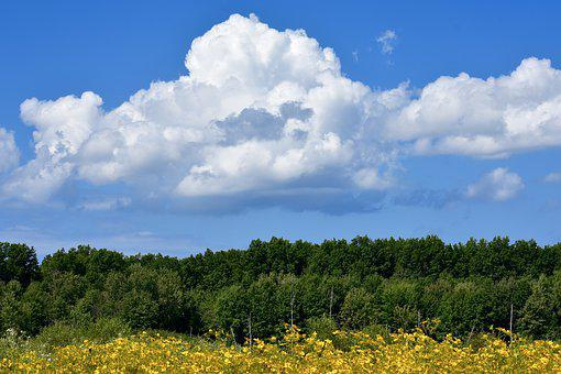 Field, Trees, Clouds, Landscape, Nature, Sky, Meadow