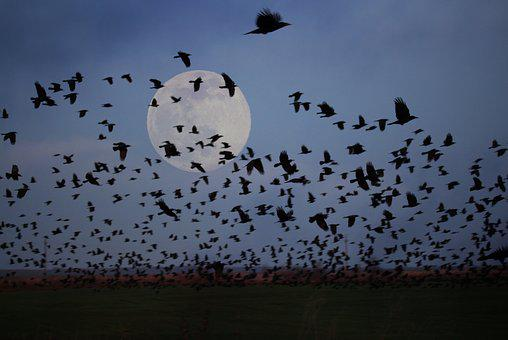 Luna, Birds, Flight, Stol, Night, Nature, Mystical