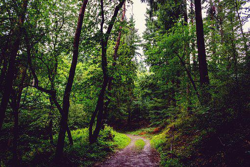 Forest, Path, Nature, Day, Green, Tree, Trees, Overcast