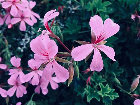 Nature, Purple, Pink, Flower, Garden, Wonderful