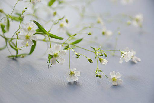 Flowers, Kachim, Plant, White, Soft Light