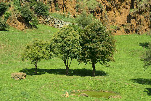 Trees, Nature, Landscape, Silence, Idyllic, Earth, Sky