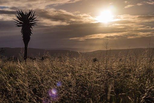 Golden Hour, Sunset, Sky, Clouds, Landscape, Light, Sun