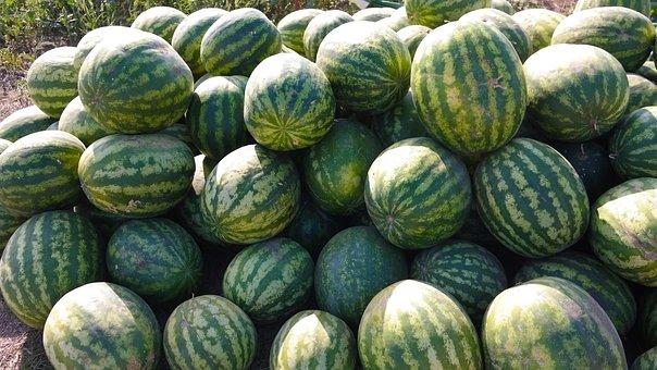 Watermelon, Sweet, In The Summer Of, Juicy, Vegetarian