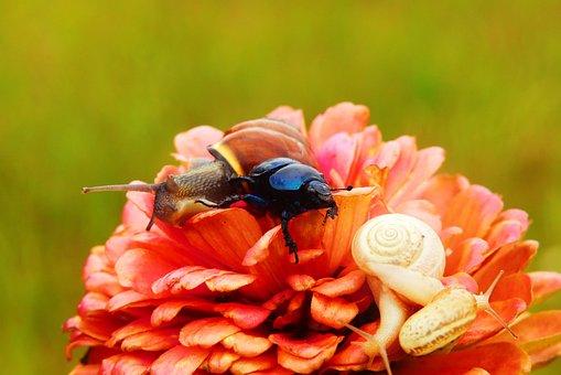 Forest Beetle, Zaroślarka Total, The Beetles, Molluscs