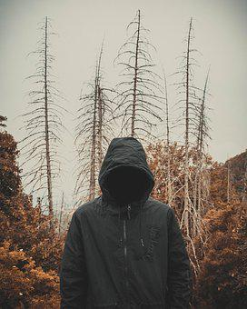 Forest, Dark, Trees, Old, Mood, Mystic, Horror Movie