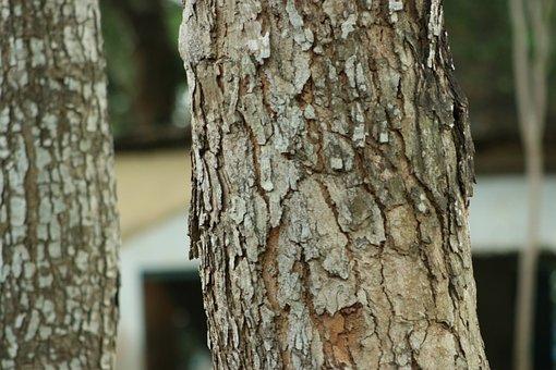 Nature, Tree, Wood, Landscape, Trees, Old, Pattern, Log