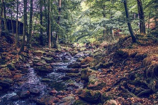 River, Creek, Water, Nature, Autumn