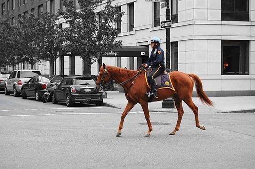 Policeman, Constable, Bobby, Copper, Horse, Animal