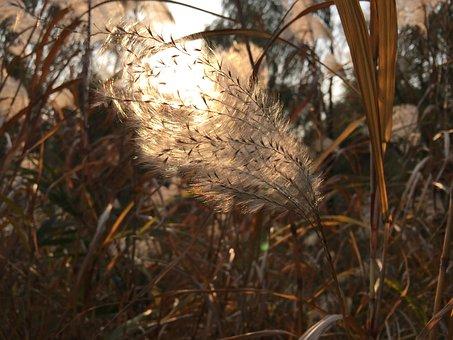 Yimiyangguang, Reed, Breeze, Autumn, Ripple