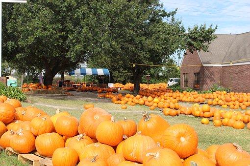 Pumpkins, Fall, Autumn, Pumpkin Patch, Orange, Harvest