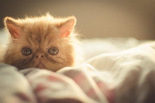 Bunny, Cat, Kitten, Cute, Animal, Pet, Persian, Kitty