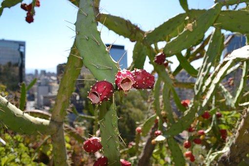 Cactus, Flower, Desert, Flora, Spike, Spiked