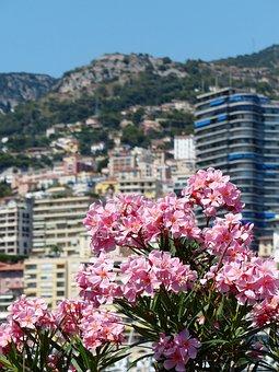 Oleander, Flower, Flowers, Pink, Nerium Oleander