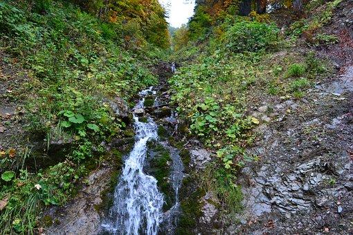 Bach, Trickle, Nature, Forest, Watercourse, Murmur
