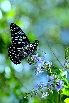 Insect, Blue, Flower, Good, Park, Gardening, Garden