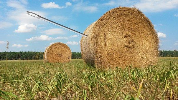 Needle In A Haystack, Search, Find, Needle, Haystack
