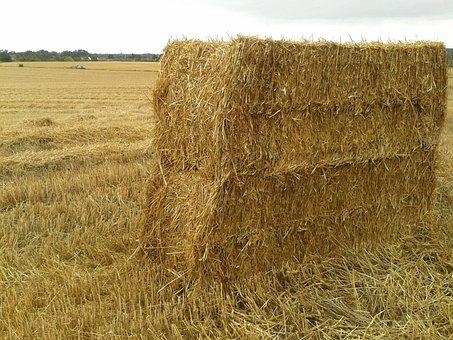 Harvest, Haystack, Fall, Wheat, Hay, Field, Farm