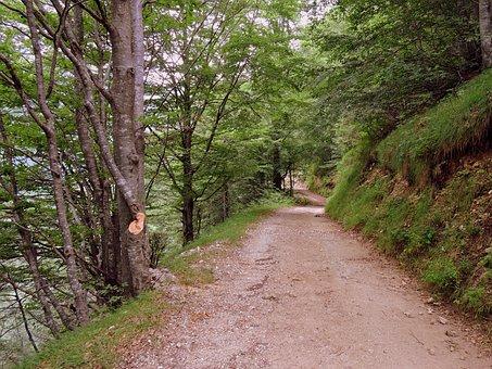 Trail, Hiking, Mountain, Walk, Veneto, Italy