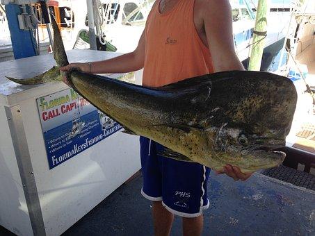 Dolphin, Catch, Fisherman, Key West, Fish, Strange