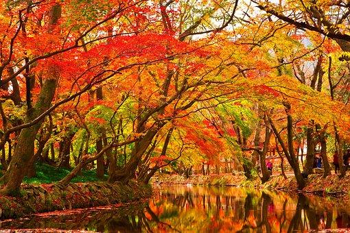 Autumn Leaves, Wood, Autumn, The Leaves, Leaf