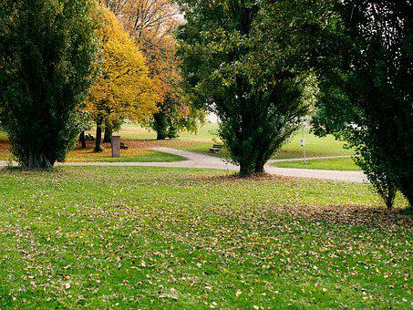 Park, Recovery, Walk, Leaves, Rhine Promenade, Trees