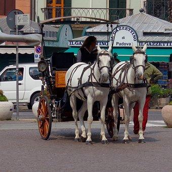 Padova, Piazza, Downtown, Italy, Coachman, Horses