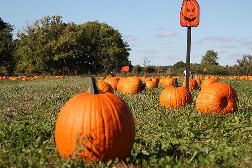 Pumpkin, Pumpkin Patch, Fall, Autumn, Harvest, Farm