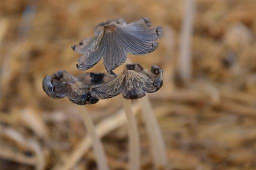 Mushrooms, Small, Nature, Autumn, Small Mushroom