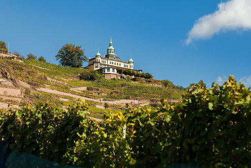 Radebeul, Spitz House, Vineyard, Winegrowing, Wine