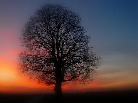 Tree, Silhouette, Sunset, Dusk, Abendstimmung