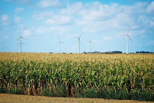 Corn, Field, Agriculture, Nature, Summer, Cornfield