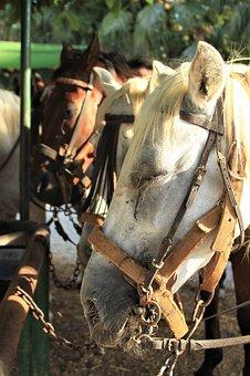 Mold, Horses, Portrait, Animal, Animal World