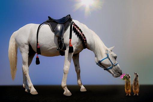 Animals, Emotions, Horse, Meerkat, Flowers, Roses, Gift