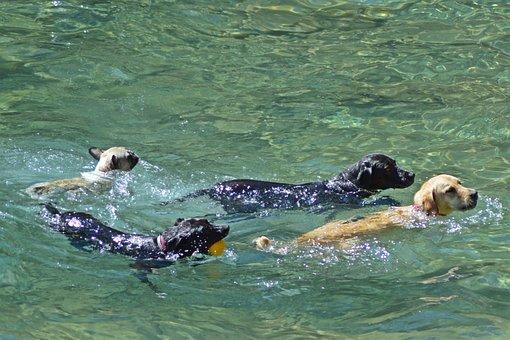 Sea, Dog Beach, Beach, Animals, Dog, Dog Friendly, Swim