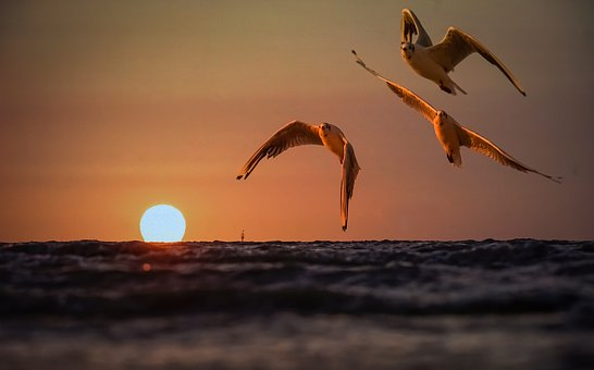 Animal, Seagull, Bird, Sunset, Silhouette, Sky