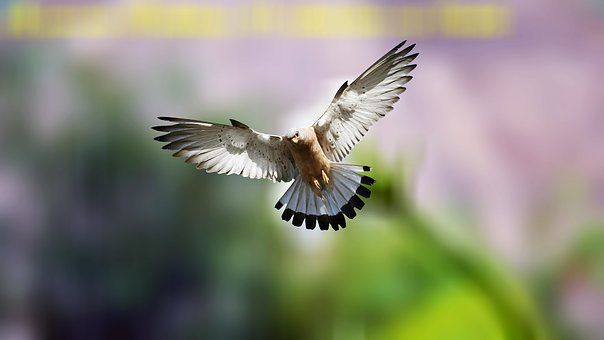 Bird, Fly, Flying, Animal, Nature, Wing, Flight, Wings