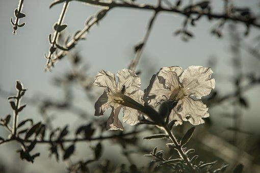 Flower, Plant, Blossom, Bloom, Bush, Nature, Close Up