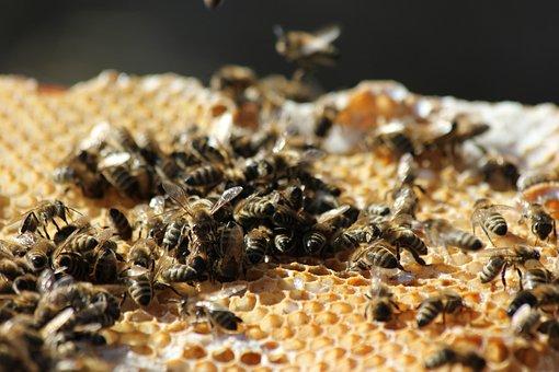 Bees, Honeycomb, Beekeeping, Close Up, Beeswax, Honey