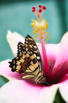Butterfly, Close Up, Insect, Animal, Summer