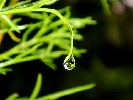 Dew Drops, Water, Drip, Dewdrop, Droplets, Dew