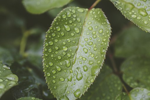 Leaf, Raindrop, Nature, Drip, Plant, Close Up, Water