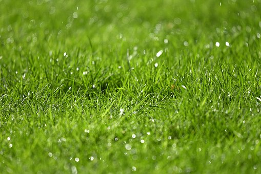 Grass, Rain Drops, Droplets, Water Drops, Moisture